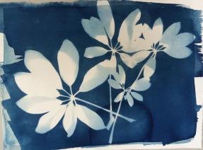 "St Croix Flora I 9'x12"""